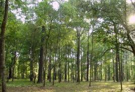 Выбираем породу дерева для дверей и паркета.