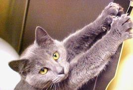Как не дать кошкам испортить межкомнатные двери дома.